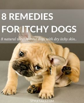 Stop Dog Itching Home Remedy