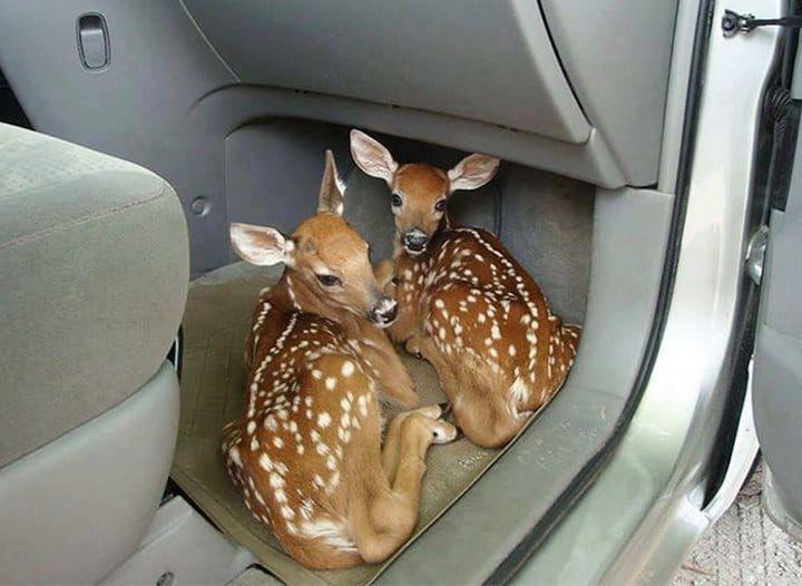 35 adorables animaux venus dire «Bonjour ».