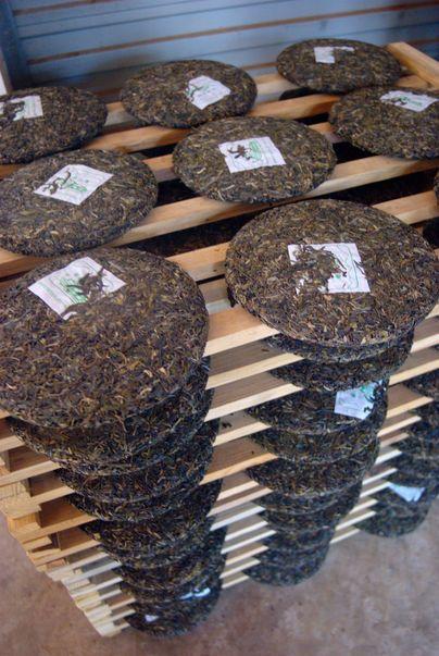 """Galettes fraîchement compressées de thé """"Puerh"""" ou thé """"Pu'Er"""" parfois aussi appelé en occident """"thé tuocha"""" . C'est une famille de thés nobles cultivés depuis plusieurs milliers d'années sur les hauteurs du Yunnan, au sud de la Chine."""