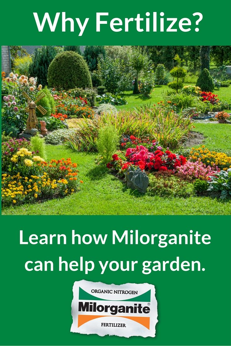 20 best summer lawn care images on pinterest lawn care backyard