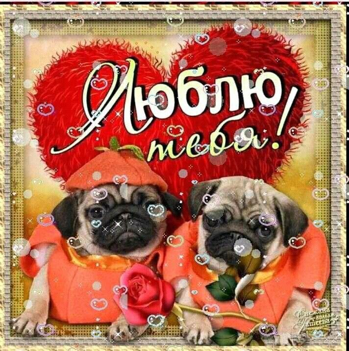 Современные февраля, открытки картинки люблю тебя