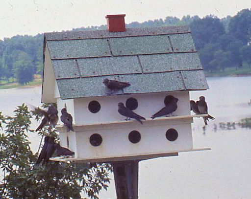 1000 images about Bird Houses on Pinterest Purple martin house
