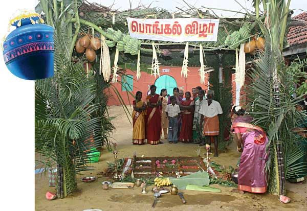 Harvest festival- Pongal- celebrated in Tamilnadu, India.
