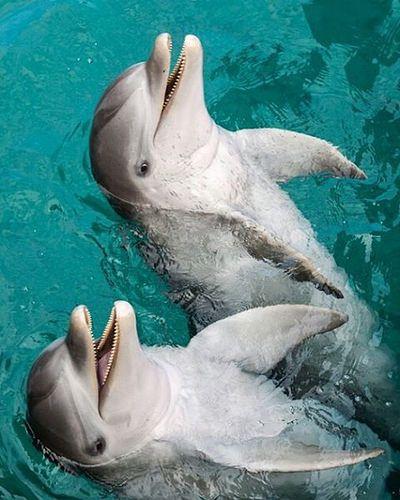 """[Dolphins] """"Smile"""" via ibrahimoo"""