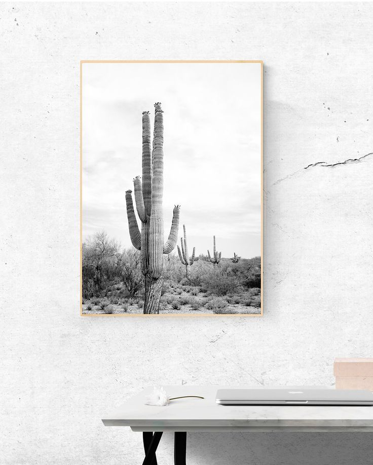 Desert Cactus Print - Large Cactus Wall Art, Black and White Photography, Mexican Wall Art, Aztec Decor, South Western Home, Arizona Poster by SisiAndSeb on Etsy
