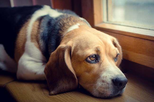 Schmerzen Beim Hund 7 Anzeichen Dass Dein Hund Schmerzen Hat In 2020 Hund Angst Hund Und Katze Hunde
