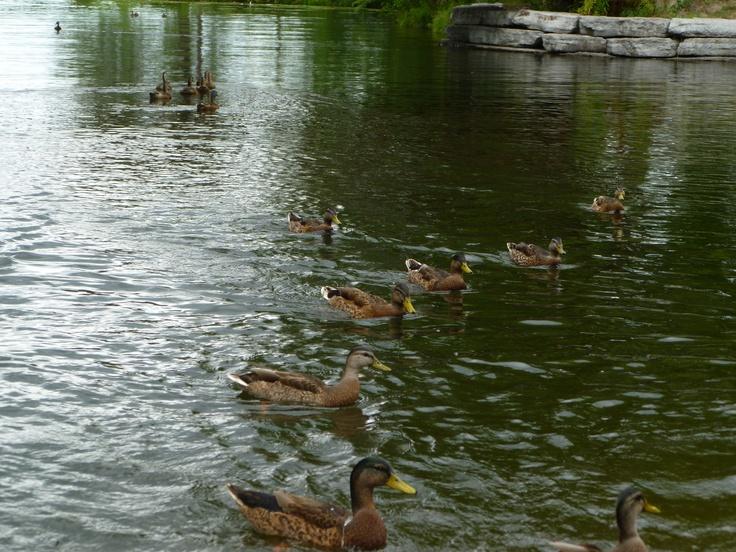 Beavermead Park, Peterborough, Ontario