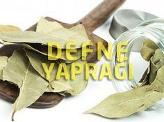 Defne Yaprağı Faydaları Nelerdir, Çayı Nasıl Yapılır?