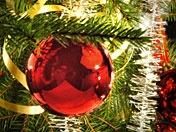 Programbild för Klassisk Jul, julgranskula. Foto: Kjell Gustafsson /SVT Bild