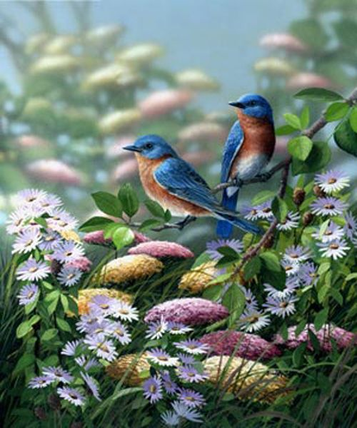 Meadow Bluebirds by Bradley Jackson: