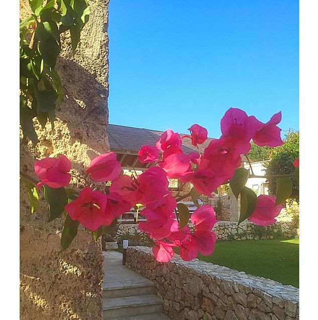 Beautiful flowers lining our villa in Puglia, Italy