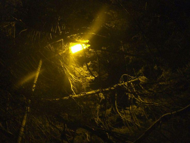 Ruth Larkin trees at night