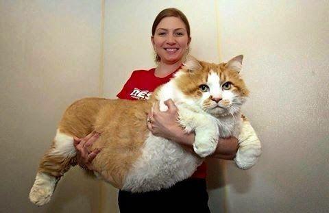 gato+gigante.jpg (480×311)
