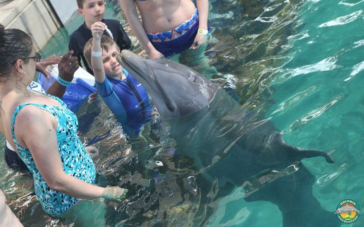 ... this morning at Dolphin Encounters, Blue Lagoon Island in the Bahamas