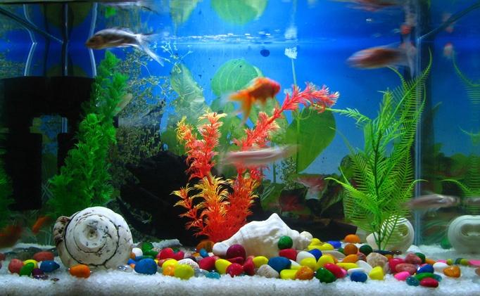 Fish tank with LED bulbs