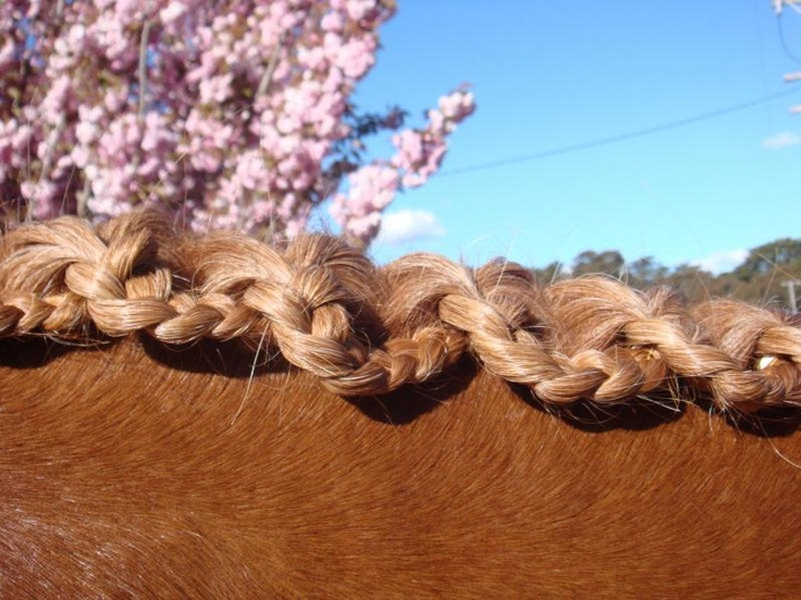 Scallop braid. Make a classic hunter braid, then pull the braid yarn through every third braid.