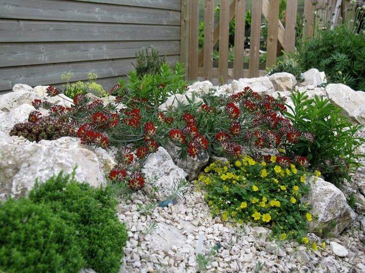 steingarten-anlegen-splitter-delosperma | garten | pinterest, Gartenarbeit ideen