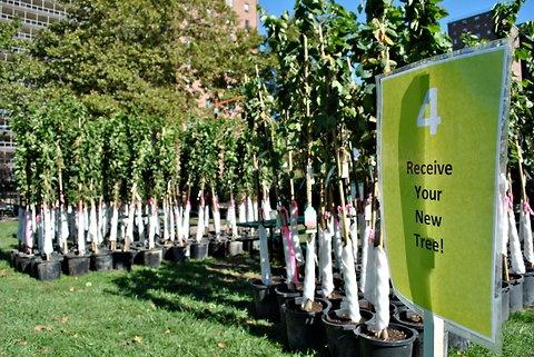 Free Trees this Saturday.New York Cities, New York City