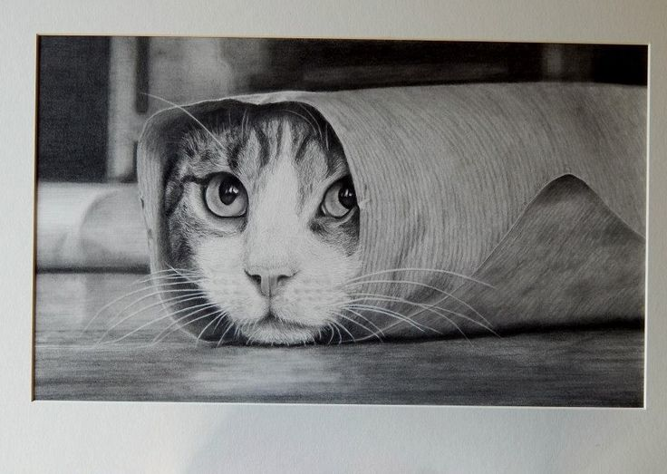 Silly sausage! Keith More hyperrealistic pencil drawing A3 size.