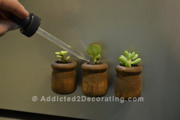 DYI: Miniature Planter refrigerator magnets