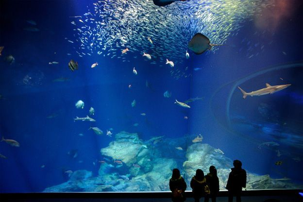 Thalassocosmos aquarium, Gouves, Heraklion Crete, Greece.