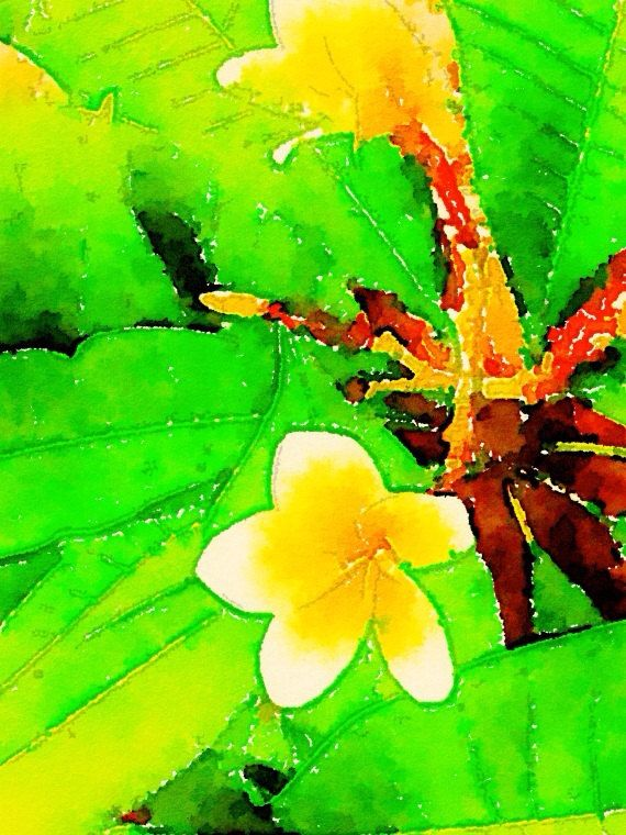 Fluorescent Frangipani Flower Print. Digital Design from The Wishing Wall Art on Etsy. Printed on high quality paper in 4 sizes. Custom sizes are available. Digital download coming soon.