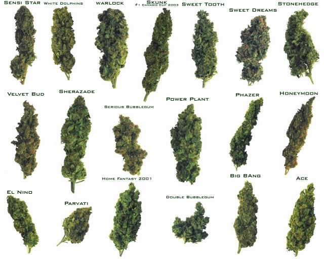 most popular weed strains