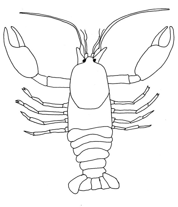 7 best structures of life crayfish picture images on