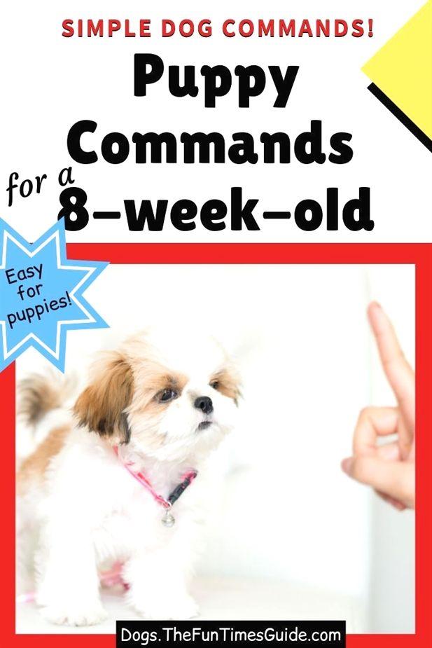 Pin On Boston Terrier Puppy Training