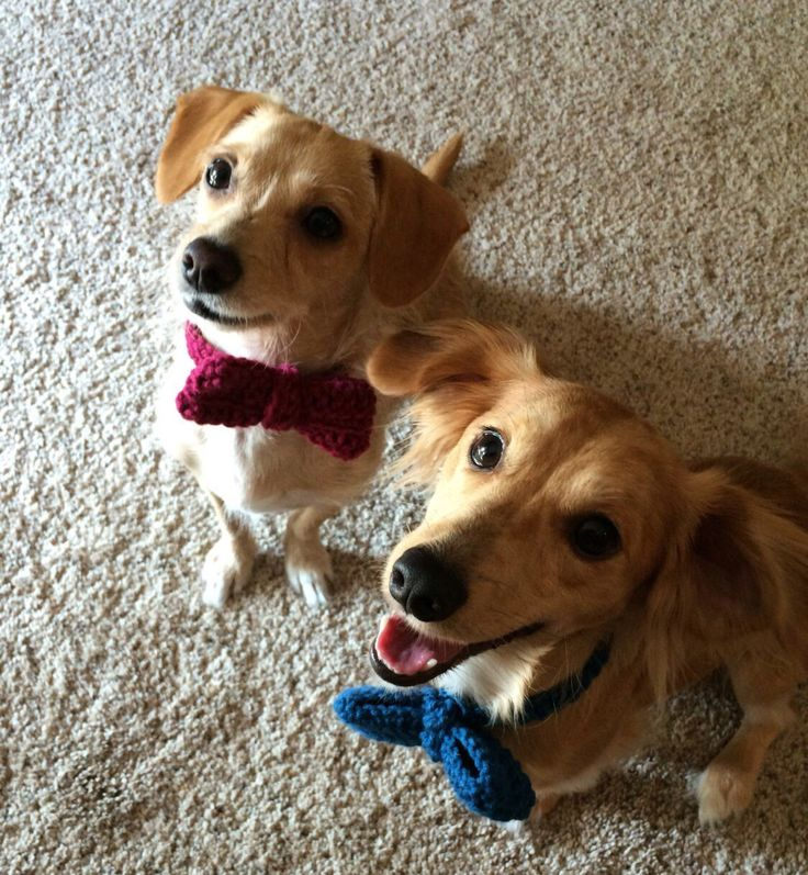 Crocheted Dog Bow Tie, Dog Bow Ties, Dog or Cat Bowtie, Dog Bowtie, Cat Bow Tie, Animal Bowtie, Crochet Bow Tie,  Photography, Dog Clothes https://www.etsy.com/listing/457397084/crocheted-dog-bow-tie-dog-bow-ties-dog