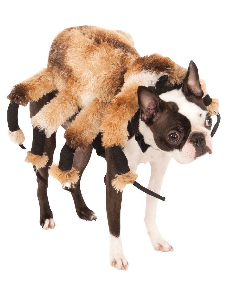 Gruselige Spinne Hundekostüm für Halloween braun , günstige Faschings  Accessoires & Zubehör bei Karneval Megastore, der größte Karneval und Faschings Kostüm- und Partyartikel Online Shop Europas!