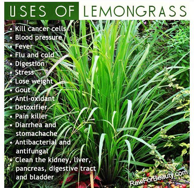 Lemon grass, #health #herbs