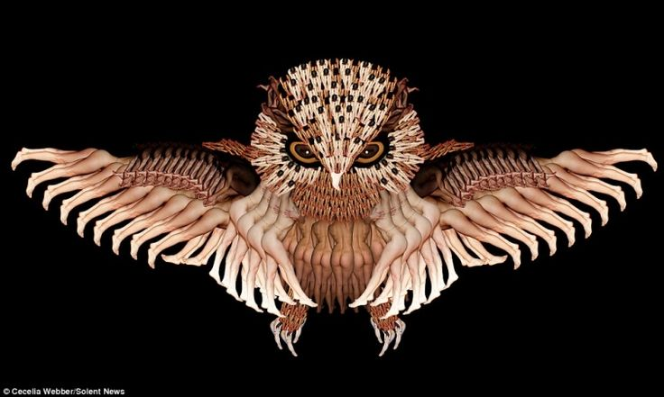 Необыкновенные картины из обнажённых тел от Сесилии Уэббер