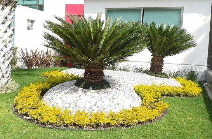 Decoración de palmas sica con piedras de rio y cemento hecho en forma de cúpula y adornado con durantas amarillas al rededor