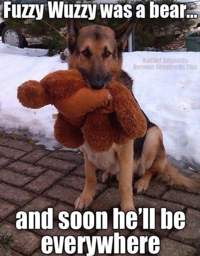 German Shepherd wants to share Fuzzy Wuzzy