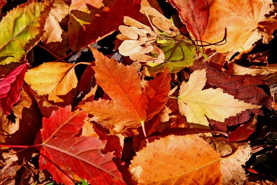 When is the first day of fall 2013? Get the equinox date and time. Plus, free autumn ecards, folklore, and more!