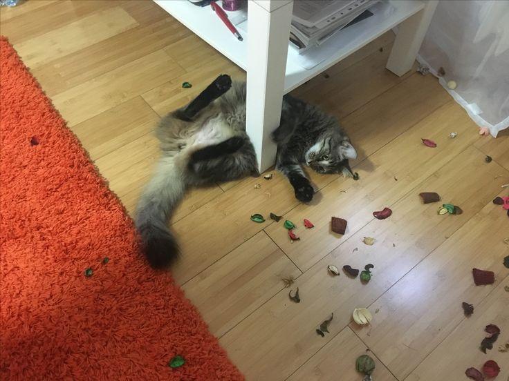 #toys for #fluffy #cat 😻