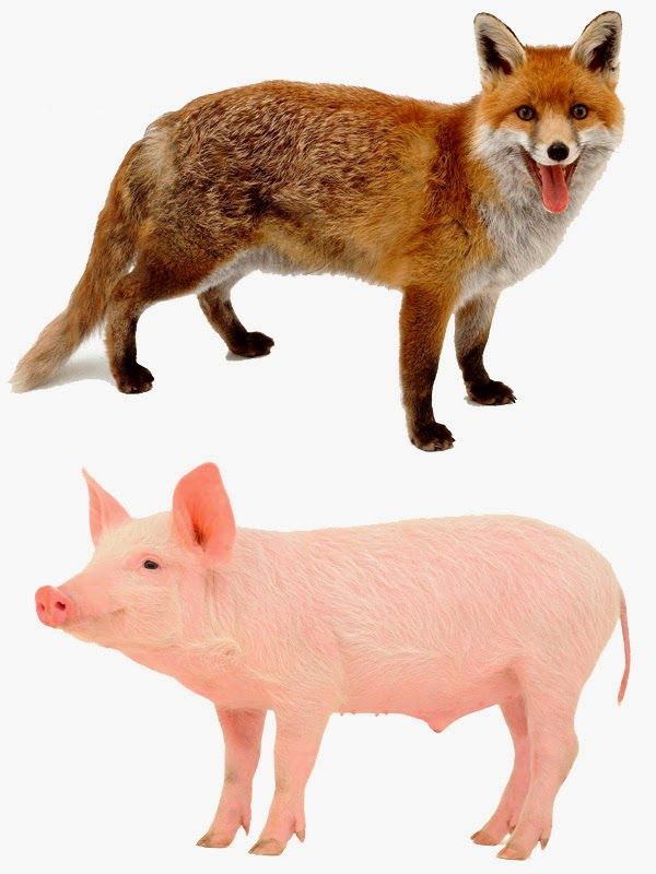 BITS D'ANIMALS DEL BOSC I DE LA GRANJA