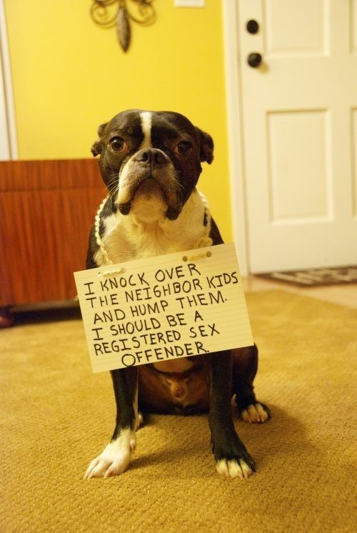 LOL one of the best dog shaming photos I have seen yet