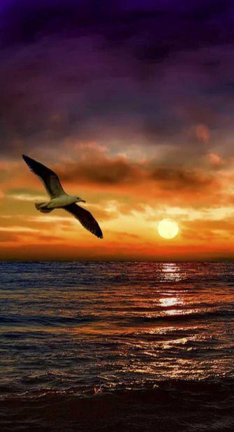 """""""En cualquier dirección que vayas, Vamos con todo el corazón"""" ...sea gull…"""