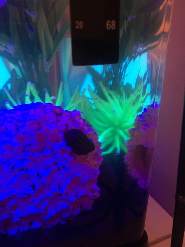 Gary my snail pets snail aquarium