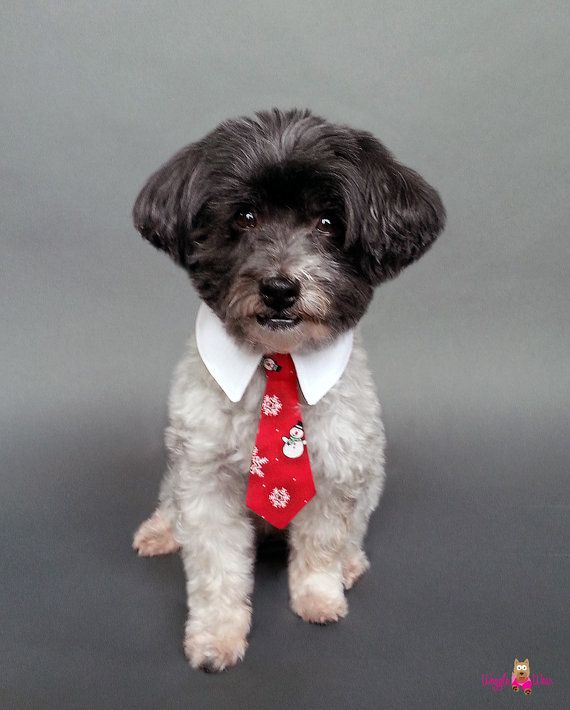 Great Collar Bow Adorable Dog - 46fd0ee334c261ec550ed0c6e7317032--red-ties-cute-cute  2018_605782  .jpg