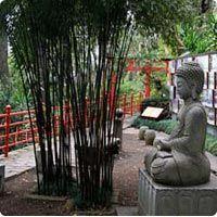 Comprar Bambus : Como escolher os seus bambus ?