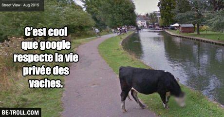 Google floute le visage des vaches... - Be-troll - vidéos humour, actualité…