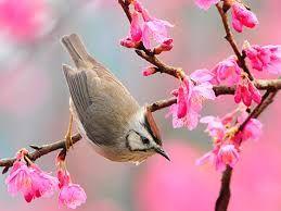 Resultado de imagen para primavera en imagenes