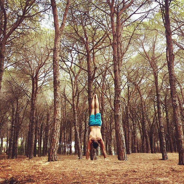 Un albero a testa in giù! Face down tree? Adho mukha vrksasana! #yogachallenge #yogaman #yogafun #yogafit #adhomukhavrkasana #facedowntree #sardinia #sardegna❤️ #yogasardinia #yogasardegna #budoni #yogainpineta Lets try an handstand in a pine woods, lets feel like a tree! Yoga pose, adho mukha vrksasana, face down tree!