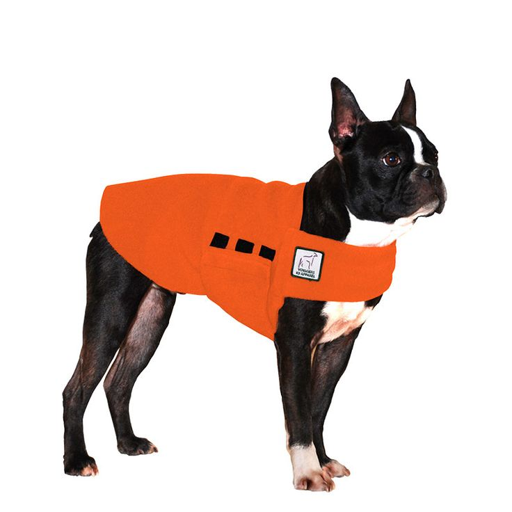 Orange Boston Terrier Dog Tummy Warmer, great for warmth, anxiety and laying with our dog rain coat. High performance material. Made in the USA.