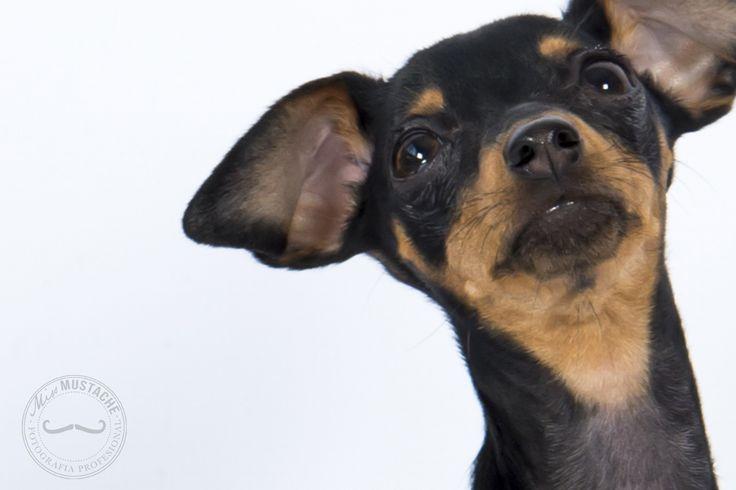 Fotografía de perros | Fotografía de gatos | Fotografía de mascotas