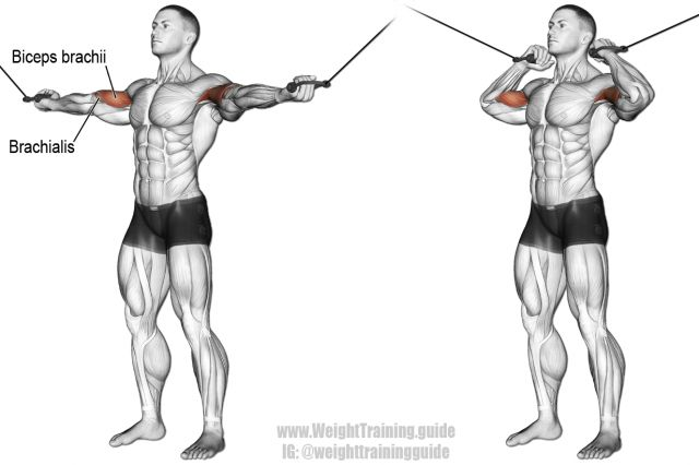 Overhead cable curl exercise