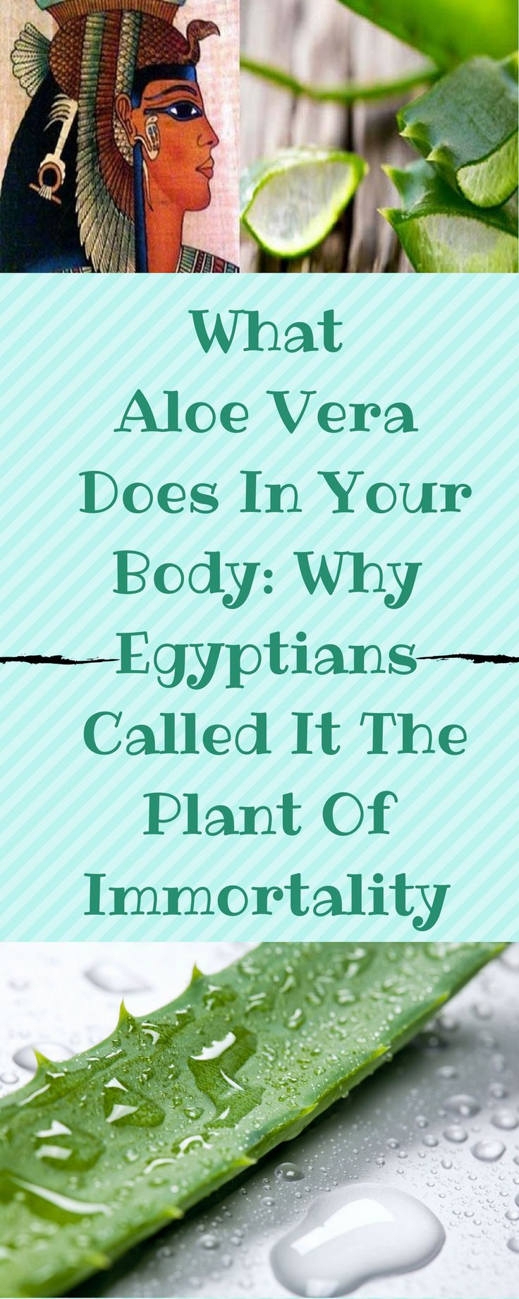 WHAT ALOE VERA DOES IN YOUR BODY: WHY EGYPTIANS CALLED IT THE PLANT OF IMMORTALITY